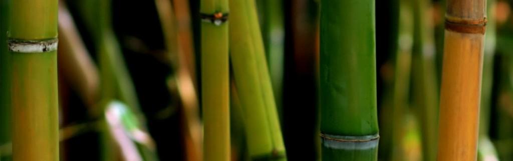 cropped-bamboo-close.jpg
